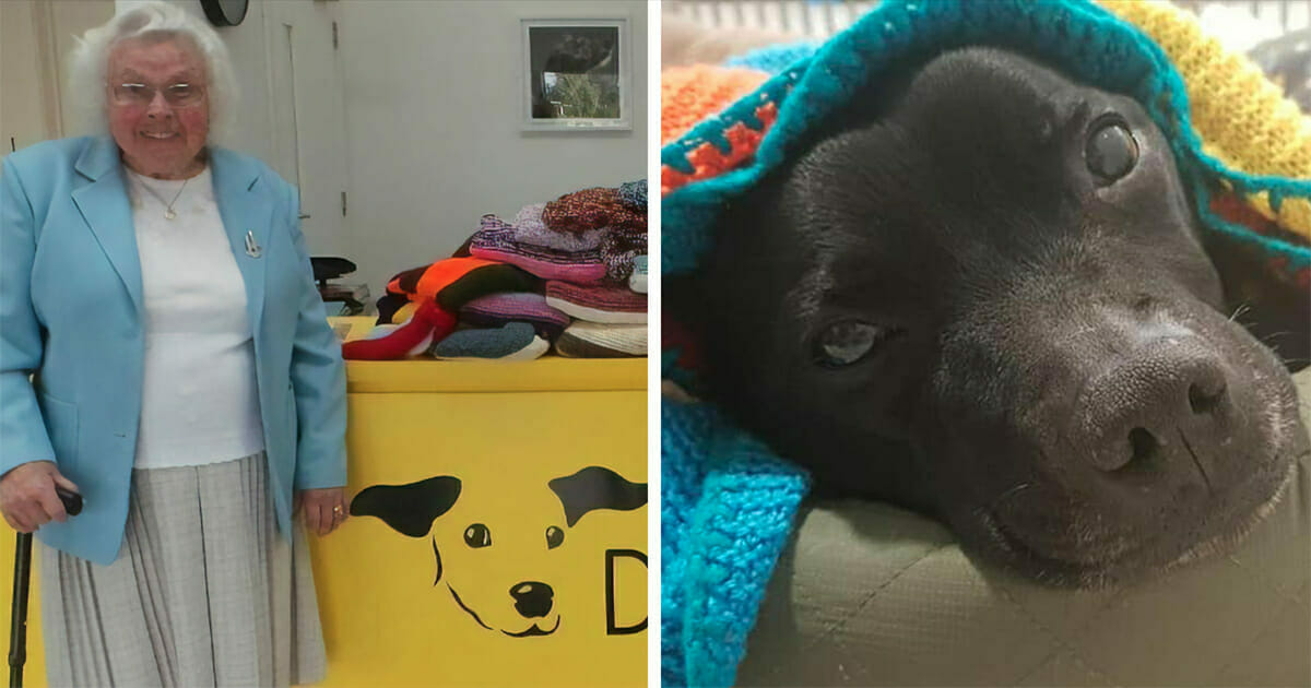 89-year-old woman has knitted more than 450 blankets for shelter dogs, and they're so cozy