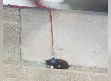 Cat on a leash rescued from dangerous ledge on Bay Bridge