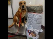 Dog dumped at shelter with his bed and of all his toys, as family didn't have enough time for him