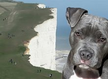 Dog saves young girl from falling off deadly 60-foot cliff