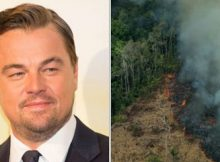 """Leonardo DiCaprio's """"Earth Alliance"""" is donating $5 million to stopping the Amazon fires"""