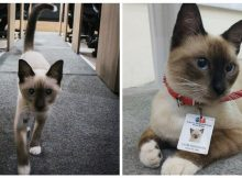After a cat took shelter in a law firm, employees gave him an official job so he could stay