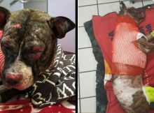 $10,000 reward offered to find heartless culprit who tied up and set fire to dog in park