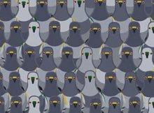 Most people can't find the cat among the pigeons in less than 18 seconds