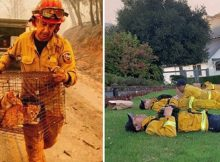 Thank you firefighters: Dramatic photos shows exhausting battle against California wildfires