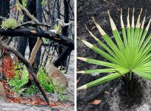 Life returns to scorched Australian lands: Here are 27 photos that give us hope