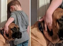Loyal dog keeps boy company when he's sent for 'time-out' – proves he is man's best friend