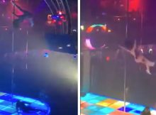 Texas stripper breaks jaw, teeth and sprains ankle after falling from 15-foot pole in routine