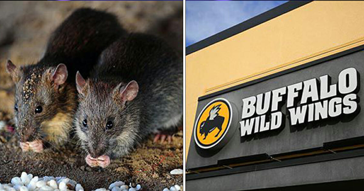 Live rat falls from ceiling and onto customer's table at Buffalo Wild Wings restaurant