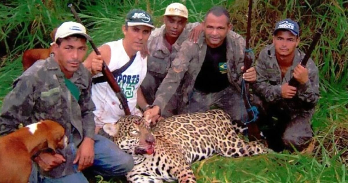 Dentist arrested for killing over 1,000 protected jaguars on sick hunting trips