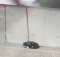 Cat on a leash rescued from dangerous ledge on Bay Bridge