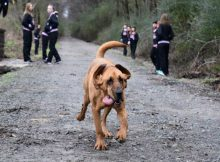 Dog runs out of house, joins a half-marathon, and finishes in 7th place
