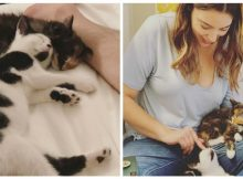 Rescue cats form an inseparable 'sister' bond, so a woman adopts them both