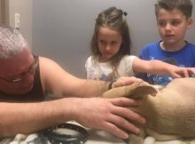 Hero pit bull dies after shielding children from venomous coral snake