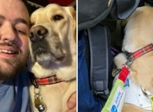 Blind man with guide dog forced to stand on train after other passengers refuse to give up seats